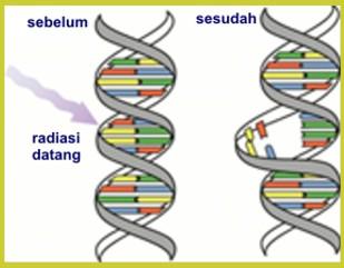Radiasi dan Efek Biologi pada Manusia