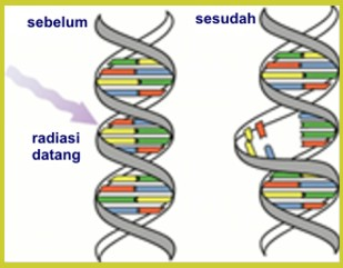 radiasi1