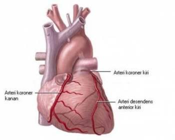 Definisi   Fungsi Jantung dan Pembuluh