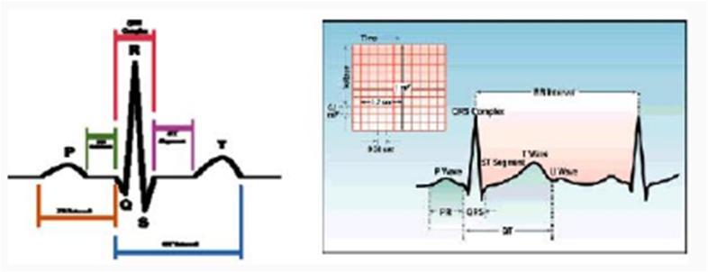 jantung signal1 Fisika Kesehatan   Biolistrik