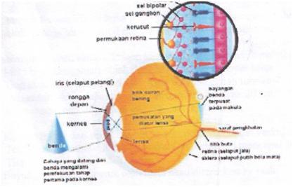 Fisika Kesehatan – BioOptik